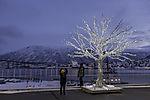 Reindeer lights in Xmastime in Tromso