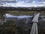 log paved path in nature reserve Fokstumyra
