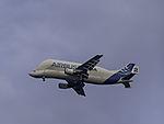 Airbus skylink Guppy