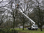 tree lumbering