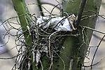 plastic in birds nest