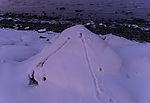Mäusespuren im Schnee
