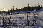 dog sledge in morning light