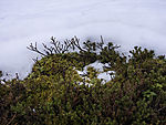 Moss and Crowberry in snow