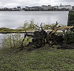 storm loss at lake Alster