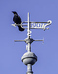 Carrion Crow on weather vane of metal, Corvus corone