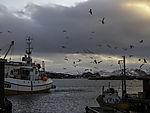 Möwen über Fischereihafen von Sommaröy