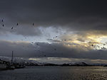 Seagulls on evening sky