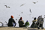 peoples and Gulls at lake Alster