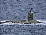 submarine like rock with Cormorants, Phalacrocorax carbo