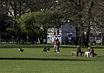 dogs on Alster meadow