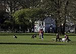 Hundeauslauf auf Alsterwiese
