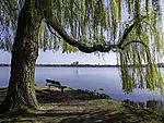 spring at lake Alster