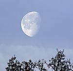 Mond über Bäumen