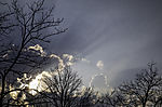 crepuscular rays over trees