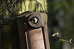 Great Tit in nesting box, Parus major