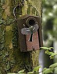 Great Tit in flight in nesting box, Parus major