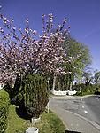 spring in Norden