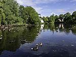 Greylag Geese on river Alster, Anser anser