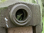 Great Tit chick in nesting box, Parus major