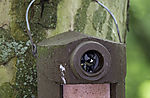Great Tit with faeces from chick, Parus major