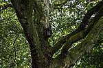 nesting box in tree
