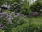 flowering front garden