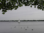 Greylag Geese and sailing boats on lake Alster, Anser anser