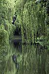 spring at pond Am Weiher
