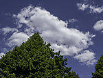 fair-weather cloud over tree