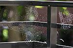 cobwebs with pollen