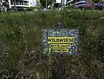 Wildwiese Goeben-Kreisel