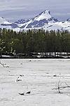 Eis auf Prestvannet im Juni