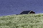 flowering summer meadow in Tromso