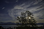 evening sun behind Birch tree, Betula sp.