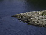 rock with Seagulls in Oslofjord