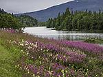 summer meadow at river Namsen