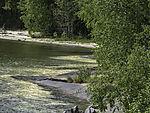 pollen on lake Strindvatnet
