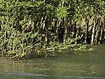 flood in river Saltdalselva