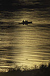 sea paddlers in evening light