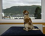 Hund blickt in die Welt