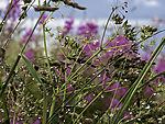 summer rain on herbs