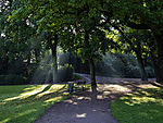 crepuscular rays in park