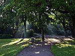Sonnenstrahlen im Park