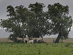 Kühe suchen Schutz vor Regen und Wind