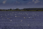 Wasservögel im Schaproder Bodden