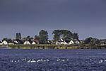 Höckerschwäne vor Hiddensee, Cygnus olor