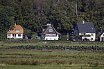 Kormorane rasten auf Hiddensee, Phalacrocorax carbo