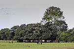 horses in shadow under trees