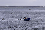fisherman on Vitter Bodden at island Hiddensee